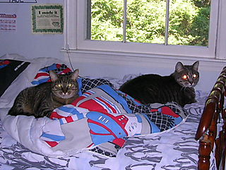 Cats on Paul's bed