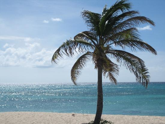 Palm-tree-on-beach