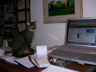 Maddy on my desk