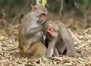 070824-monkey-babytalk_big
