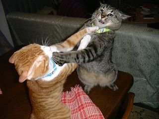 Cats_fighting_1020061