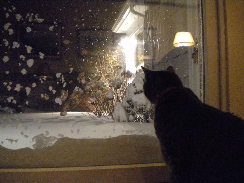 Lawson contemplates blizzard