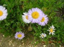 Prettyflowers_2
