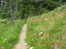 Wildflowerpath_2