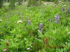 Wildflowersenlarged