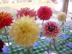 Flowercontest_3