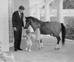 Jk_horse1_2