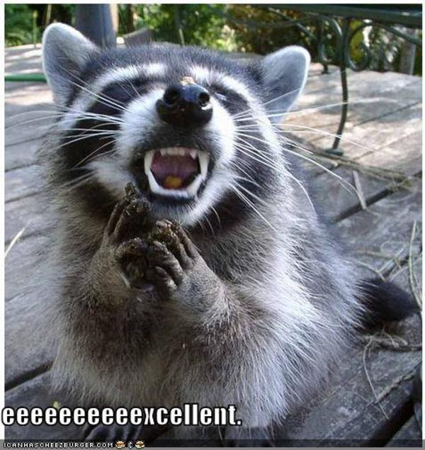 Funnypicturesevilraccoon_2