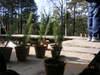 Littletrees